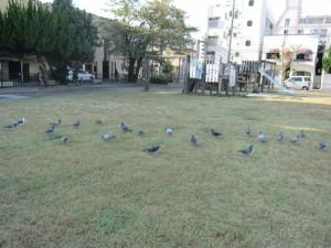 公園内ハトがたくさん