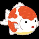 金魚イラスト