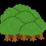森イラスト