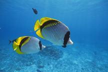 海の生き物ふれあい講座 @ ミクロ生物館
